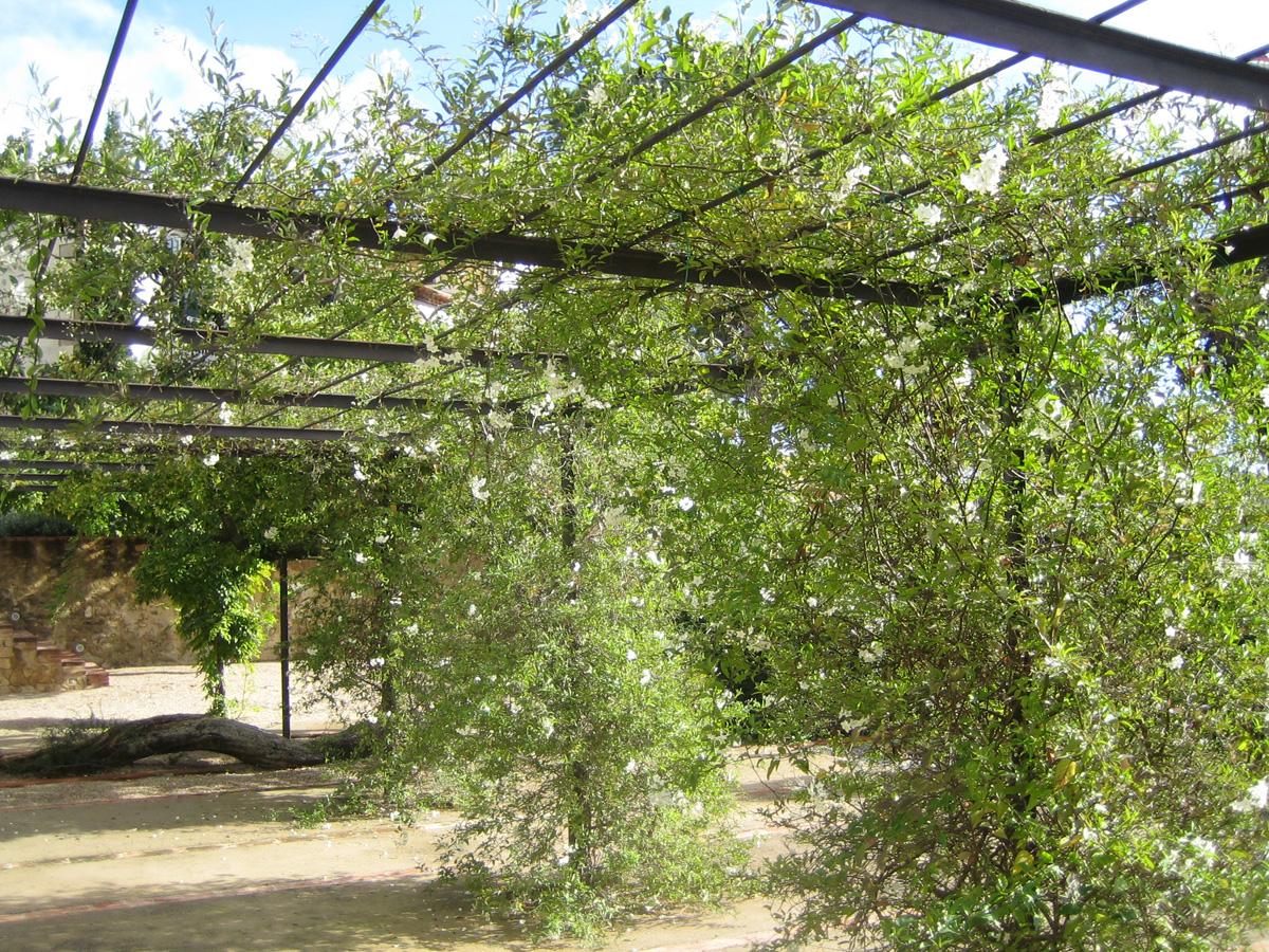 Nota legal proyectos de jardineria en barcelona for Jardineria moral barcelona